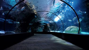 【写真あり】いおワールド鹿児島水族館に行ってきたのでレビューします!